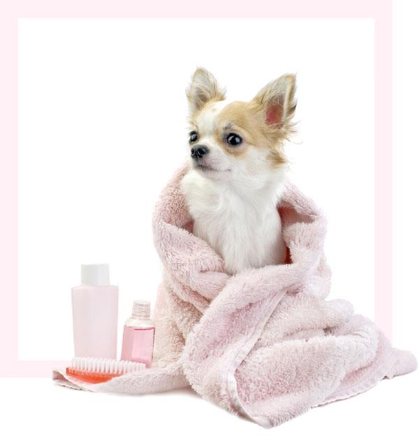 Divine Dog Groomers Ltd: Services