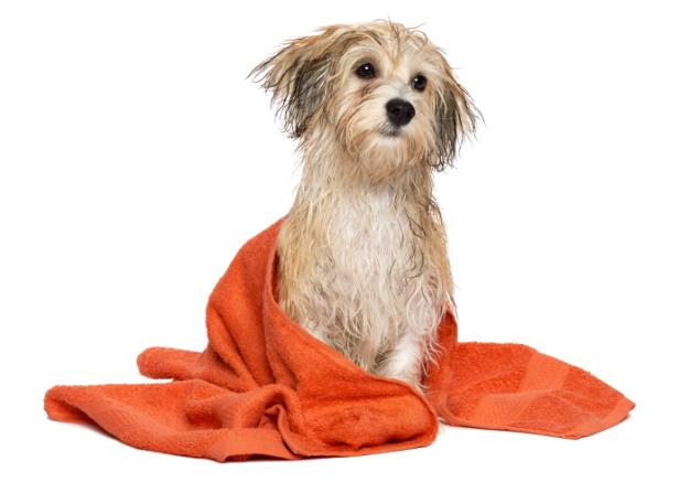 Divine Dog Groomers Ltd: Testimonials